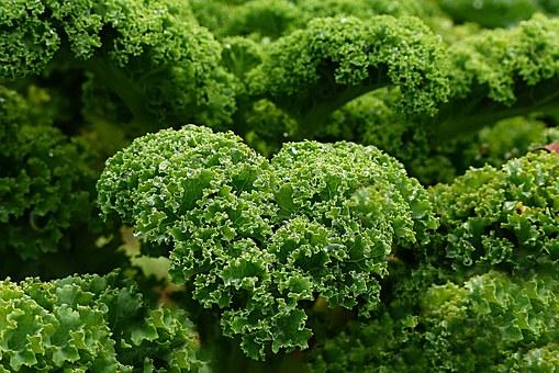 Descubrimos superalimentos: El Kale