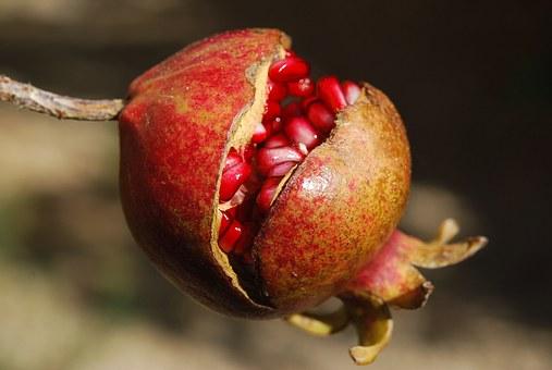 Los antioxidantes, suplementación.