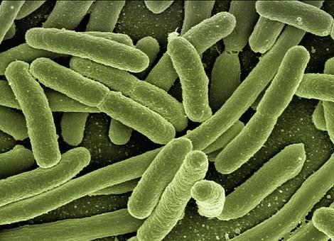 Bacterias intestinales, conoce a alguna de las protagonistas