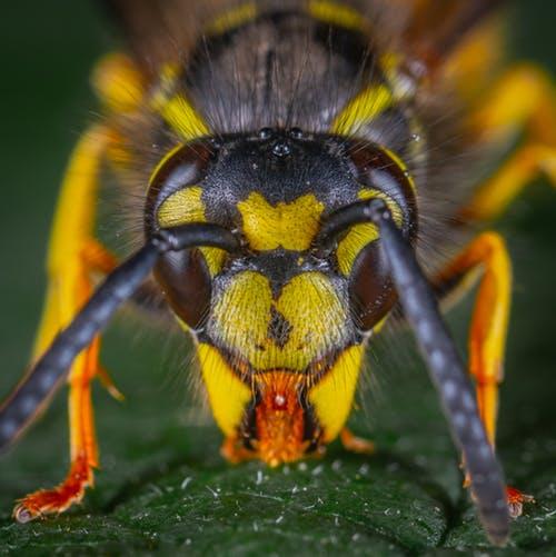 La apicultura