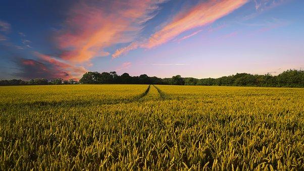 Los glifosfatos: Roundup Ready de Monsanto