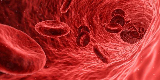 La sangre, la circulación de la vida